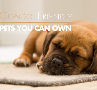4-condo-friendly-pets-you-can-own