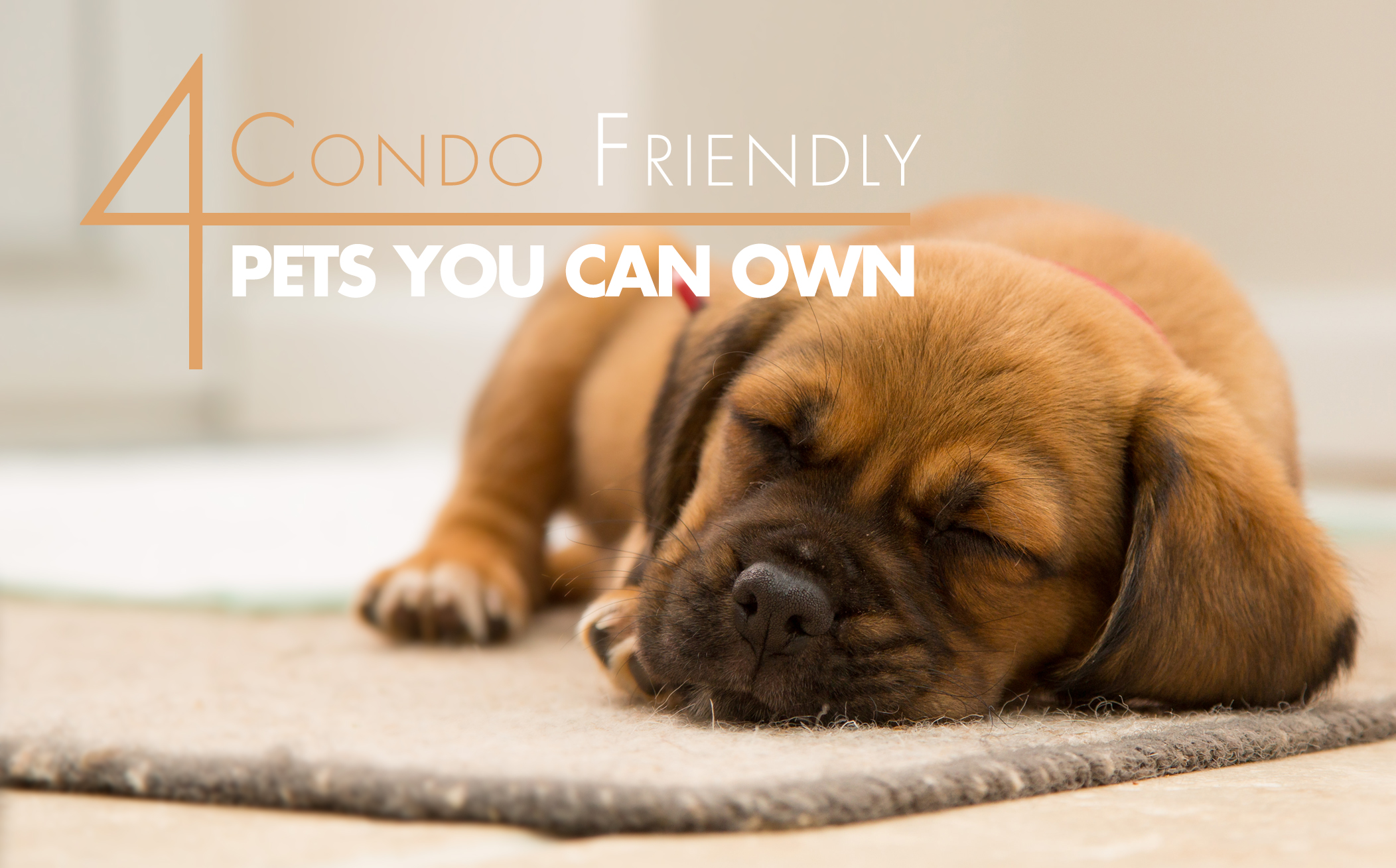 4 Condo-Friendly Pets You Can Own